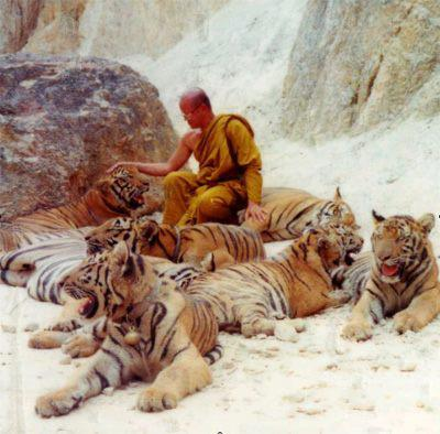 File:Monk and tigers.jpg