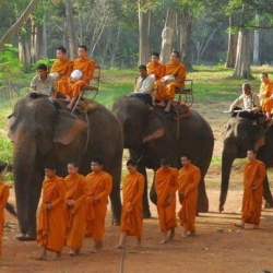 Monks and elephant.jpg