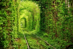 The-tunnel-of-trees.jpg