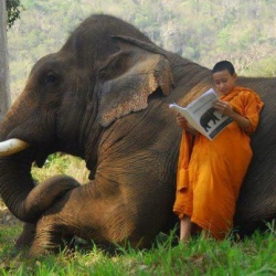 Monk and elephant.jpg