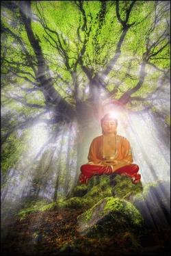 Kalpavriksha - Chinese Buddhist Encyclopedia